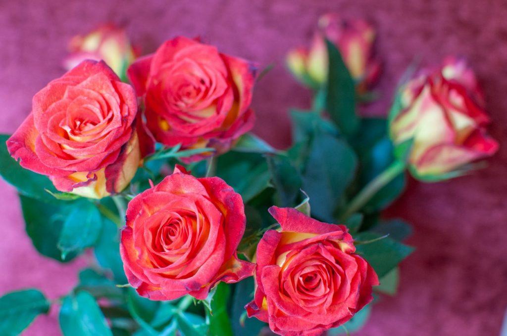 Rose Room @ Rustic Manor